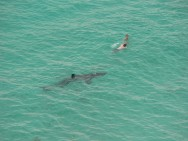 close-encounter-basking-shark-2
